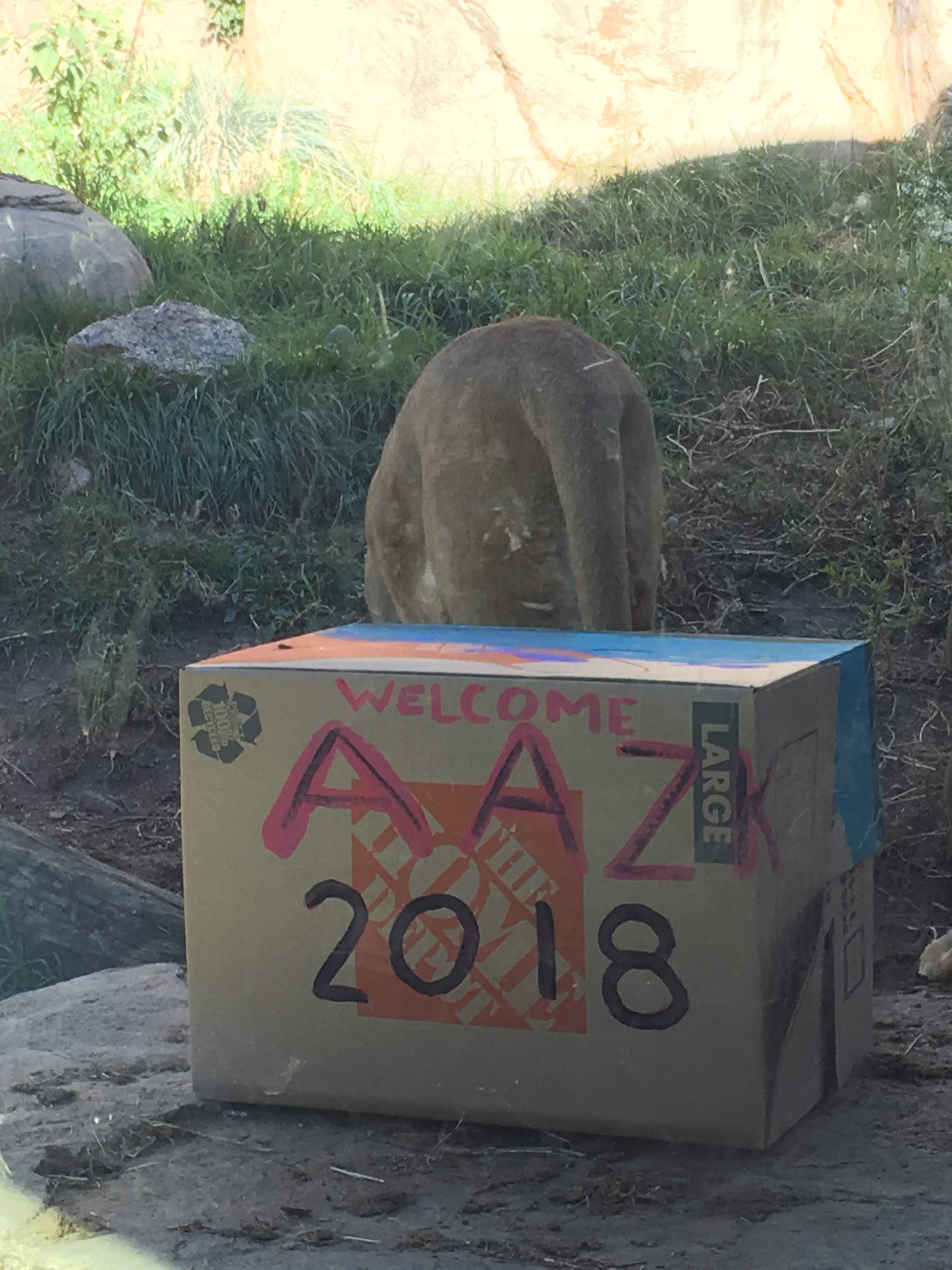 20 Days of Eco-Wellness, Day 17: A Day at the Zoo