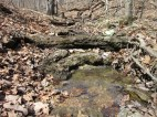 I love how the creek starts up high on the land and drops from one rocky pool to the next... such a lovely home we have