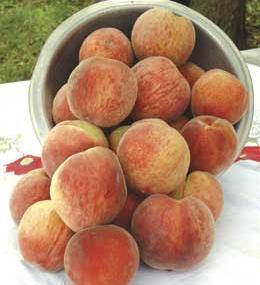 http://www.starkbros.com/products/fruit-trees/peach-trees/stark-early-white-giant-peach