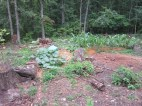 The plants REALLY like this bed. As you see the cucumbers and corn are thriving!