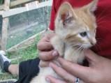 Jose again, such a cute cross eyed kitty :)
