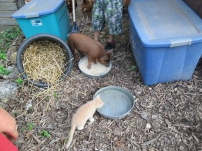 Piggy sharing her food and water with her best buddy, Azreal.