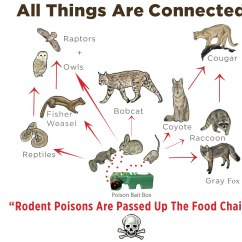 Rainforest Food Chain Diagram For Kids Ge Single Phase Transformer Wiring Poison Free Malibu  Information Resource
