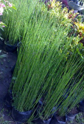 Earth Garden Amp Landscaping Philippines Plants Philippines Plants Metro Manila Plants