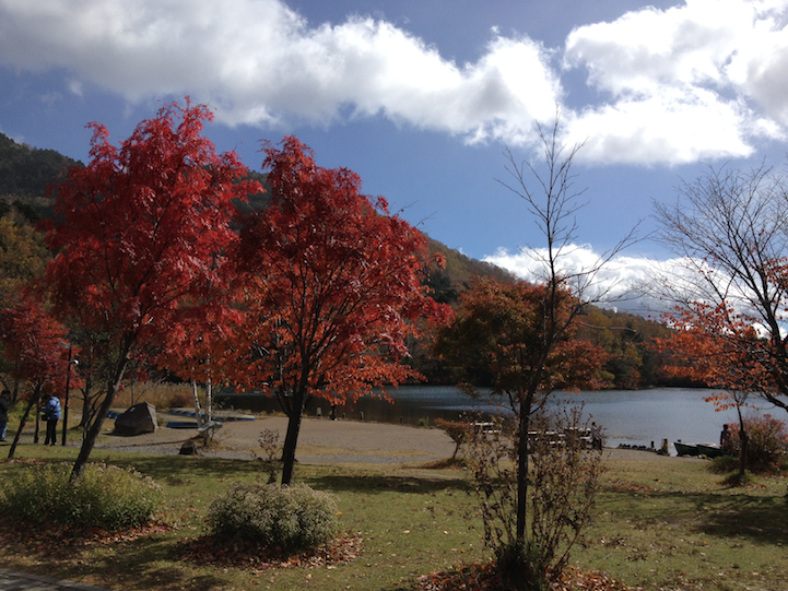 Along Lake Yu, there are brilliant Japanese Maple trees.