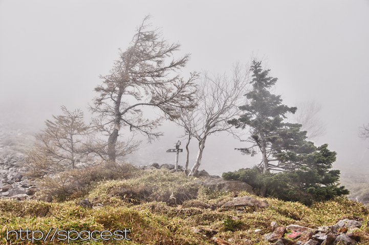 abstract trees surrounded by mist
