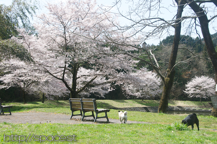 great park for hanami