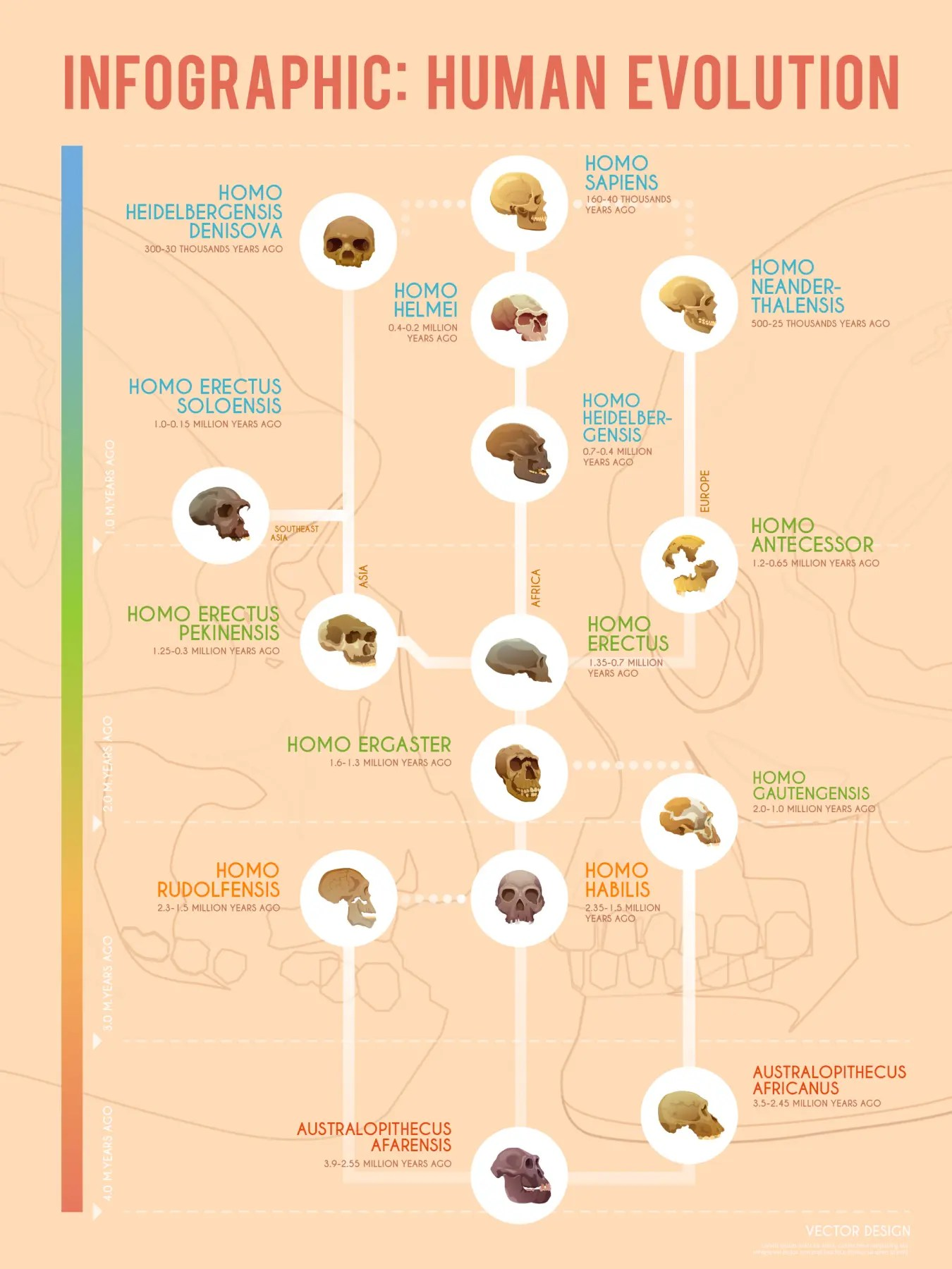Human Evolution A Timeline Of Early Hominids Infographic