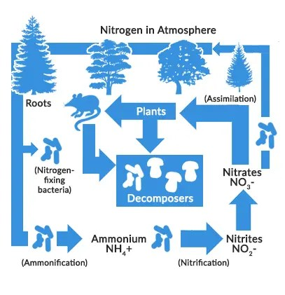 Nitrogen and water quality |Wastewater Nutrient Cycle