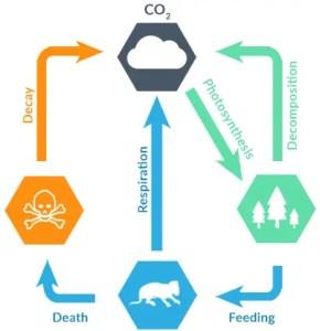 Short Term Carbon Cycle