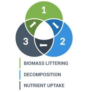 Nutrient Cycle Diagram