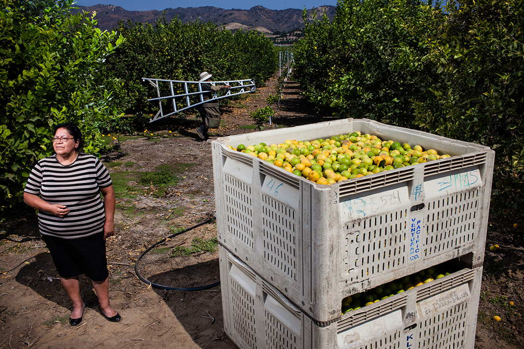 Graciela Silva worked for nine years in the fields harvesting lemons, lettuce, cucumbers, and strawberries.