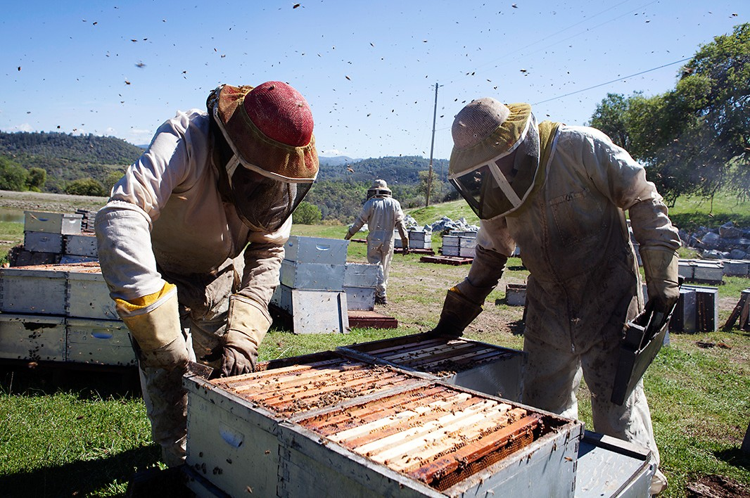 The Anderson family works among bee boxes..