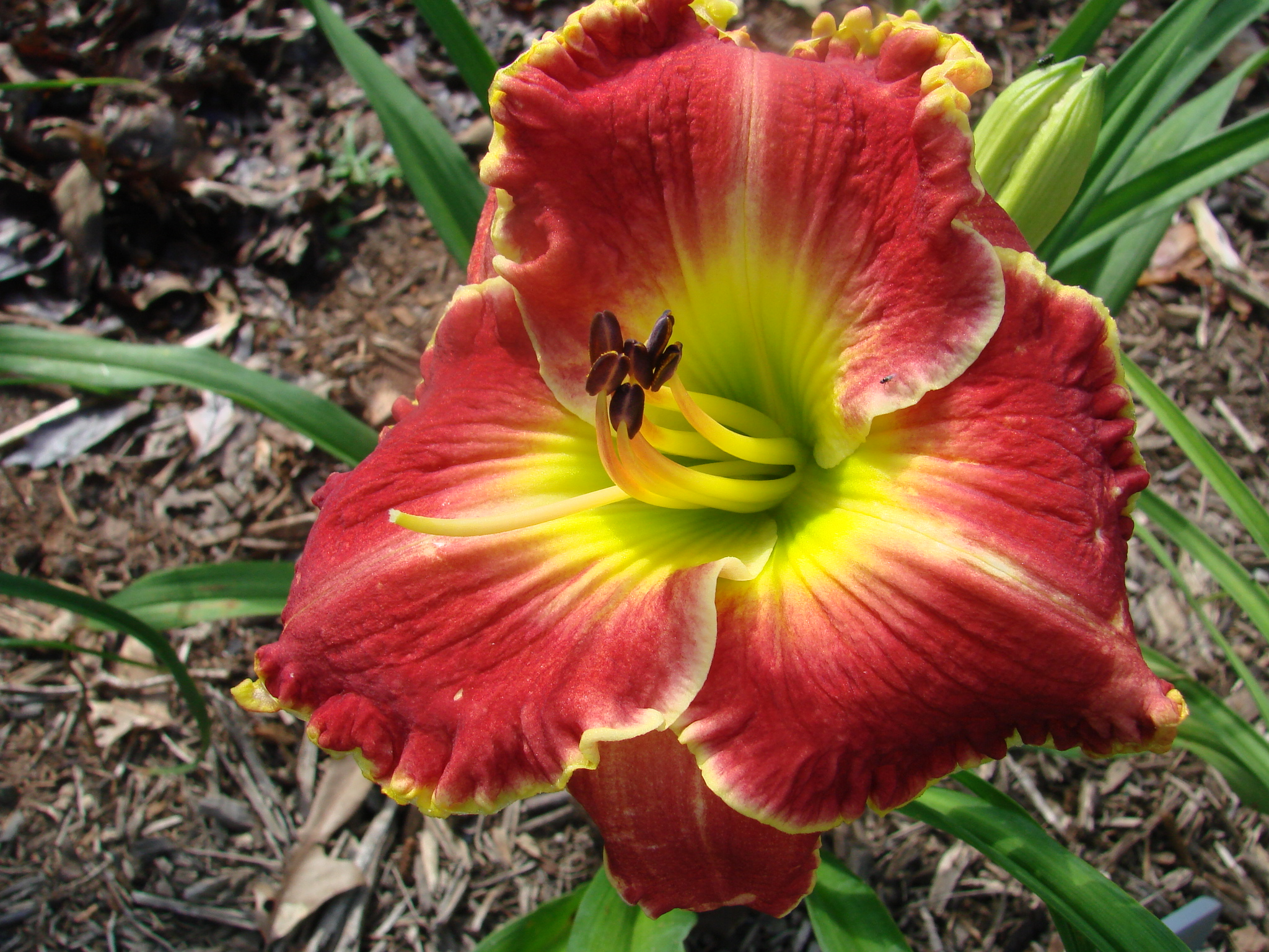Daylily Front Porch Swing