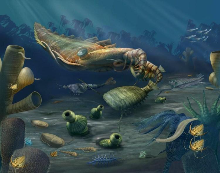 Cambrian Seas