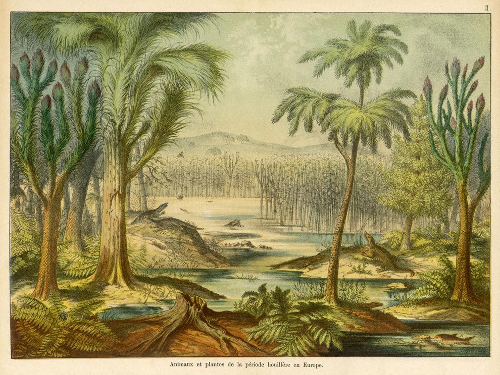 Carboniferous Earth The Age Of Bugs Earthly Universe