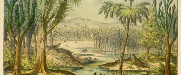 Carboniferous swamp