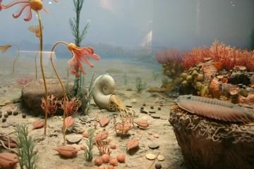 Silurian Marine Life