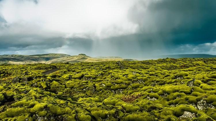 Iceland lava fields