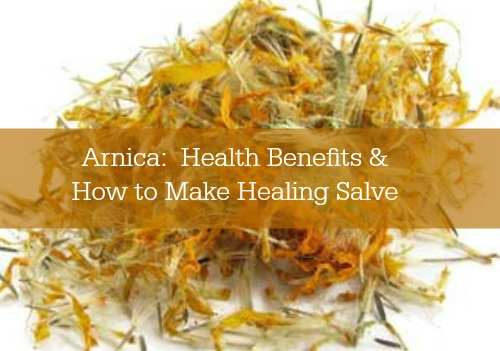 Arnica: Health Benefits & How to Make Healing Salve