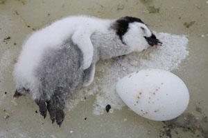 Dead Penguin Check