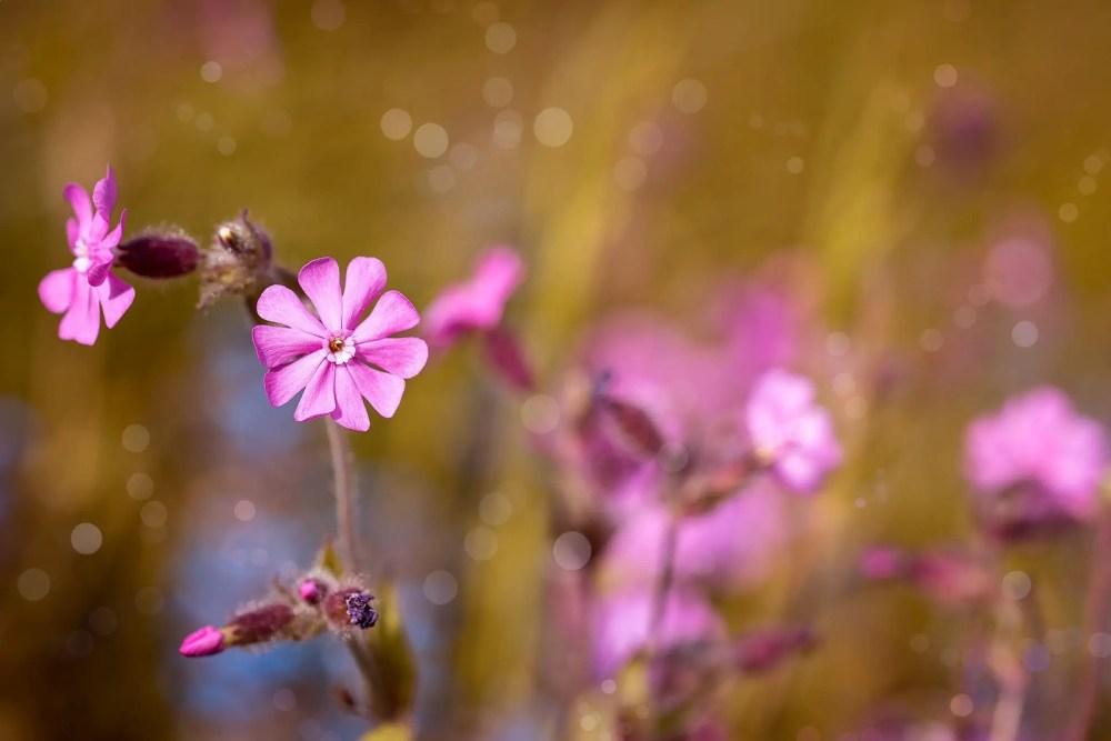 Rarest Flowers