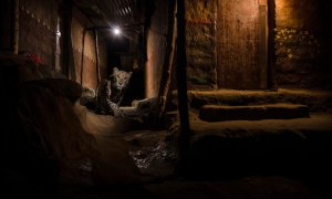 The Alley Cat by Nayan Khanolkar, wildlife photography