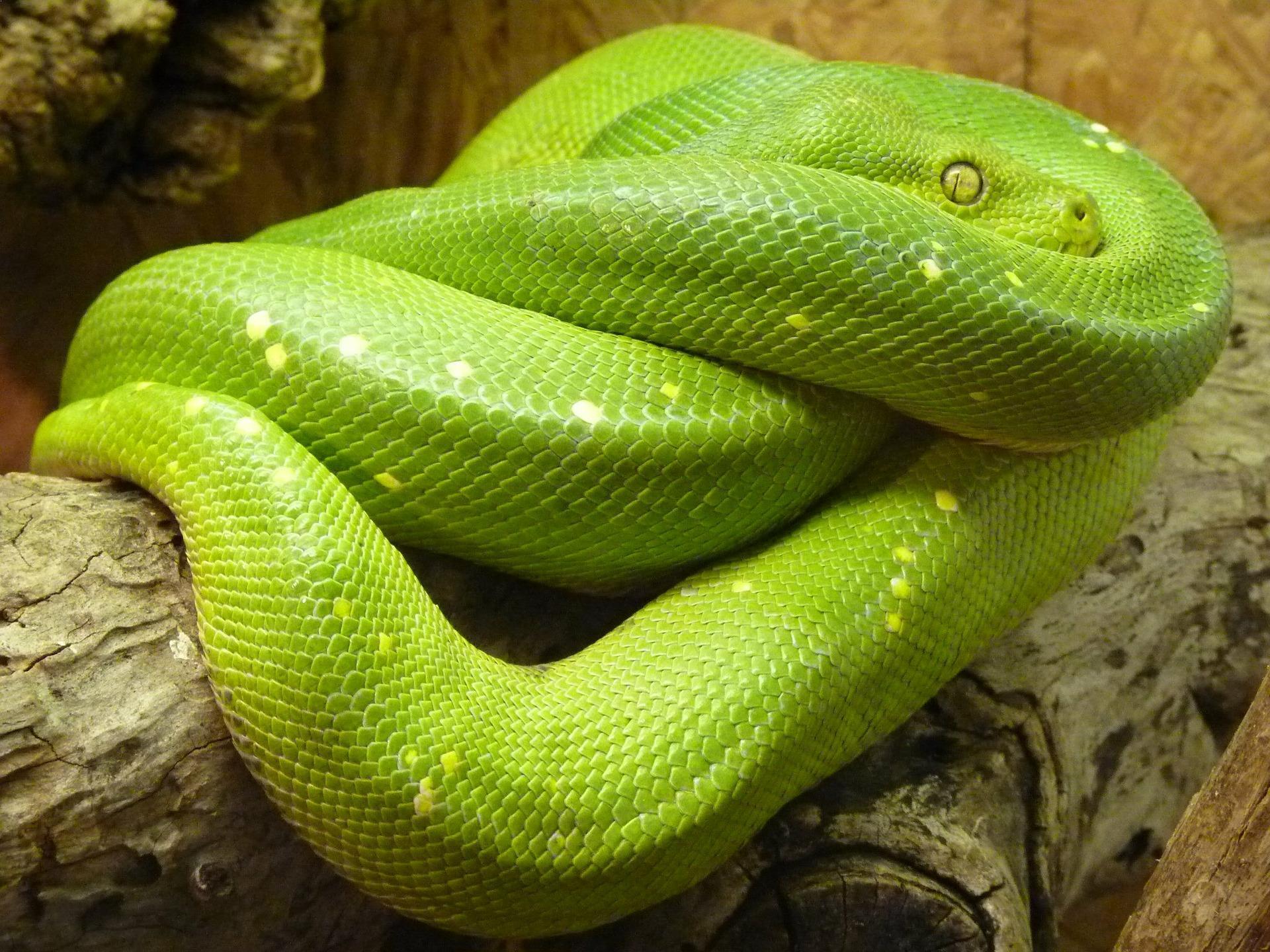 Top 10 Non-Venomous Snakes In The World
