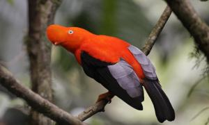 Strange Looking Birds