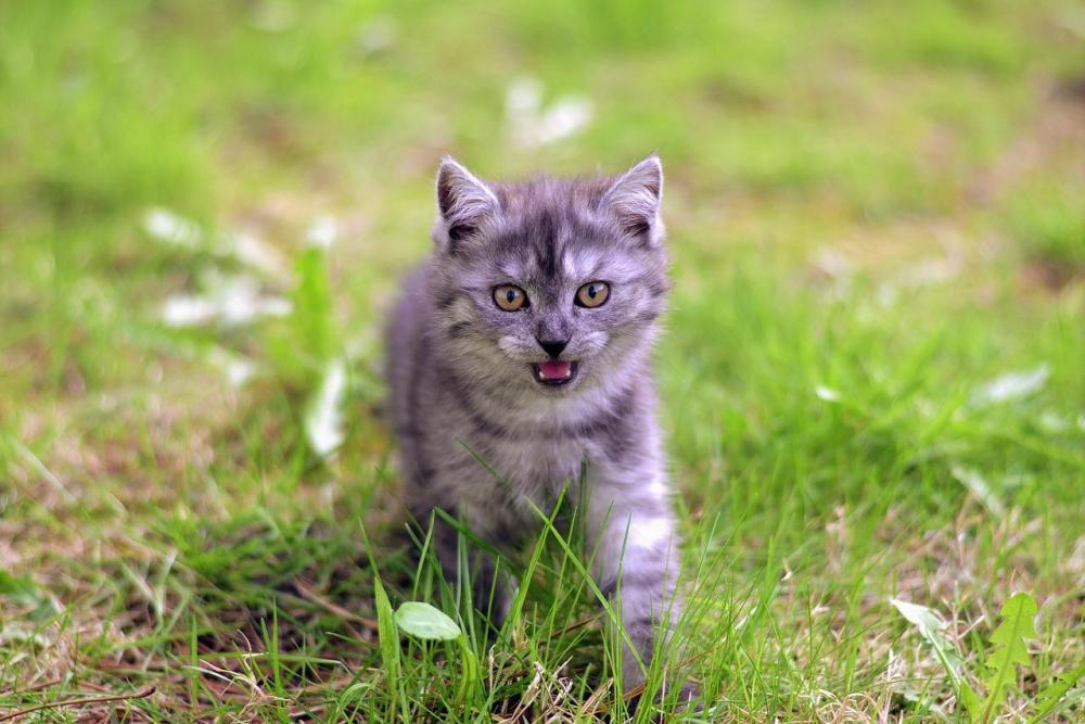 Top  Smartest Cat Breeds In The World