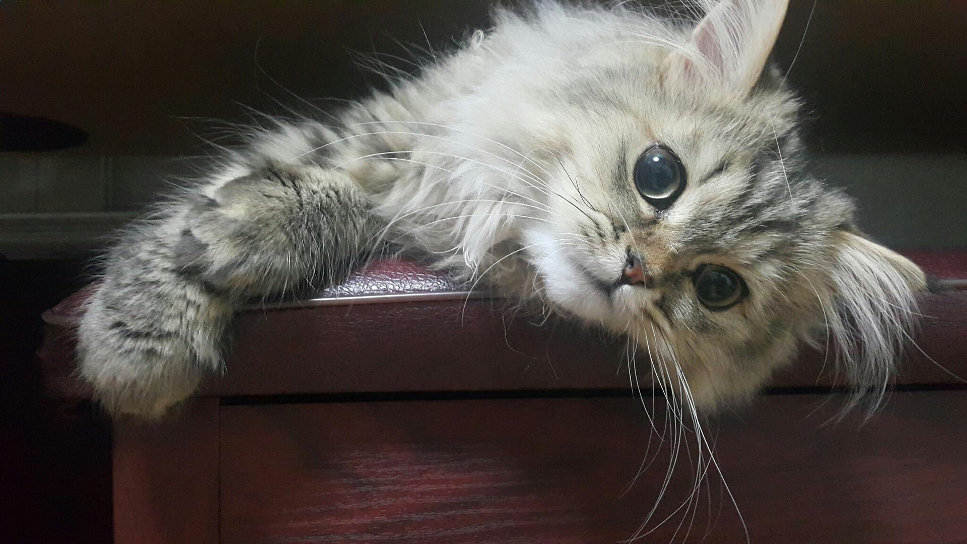 kittens with upper respiratory infection