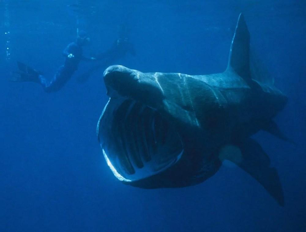 Shark Species
