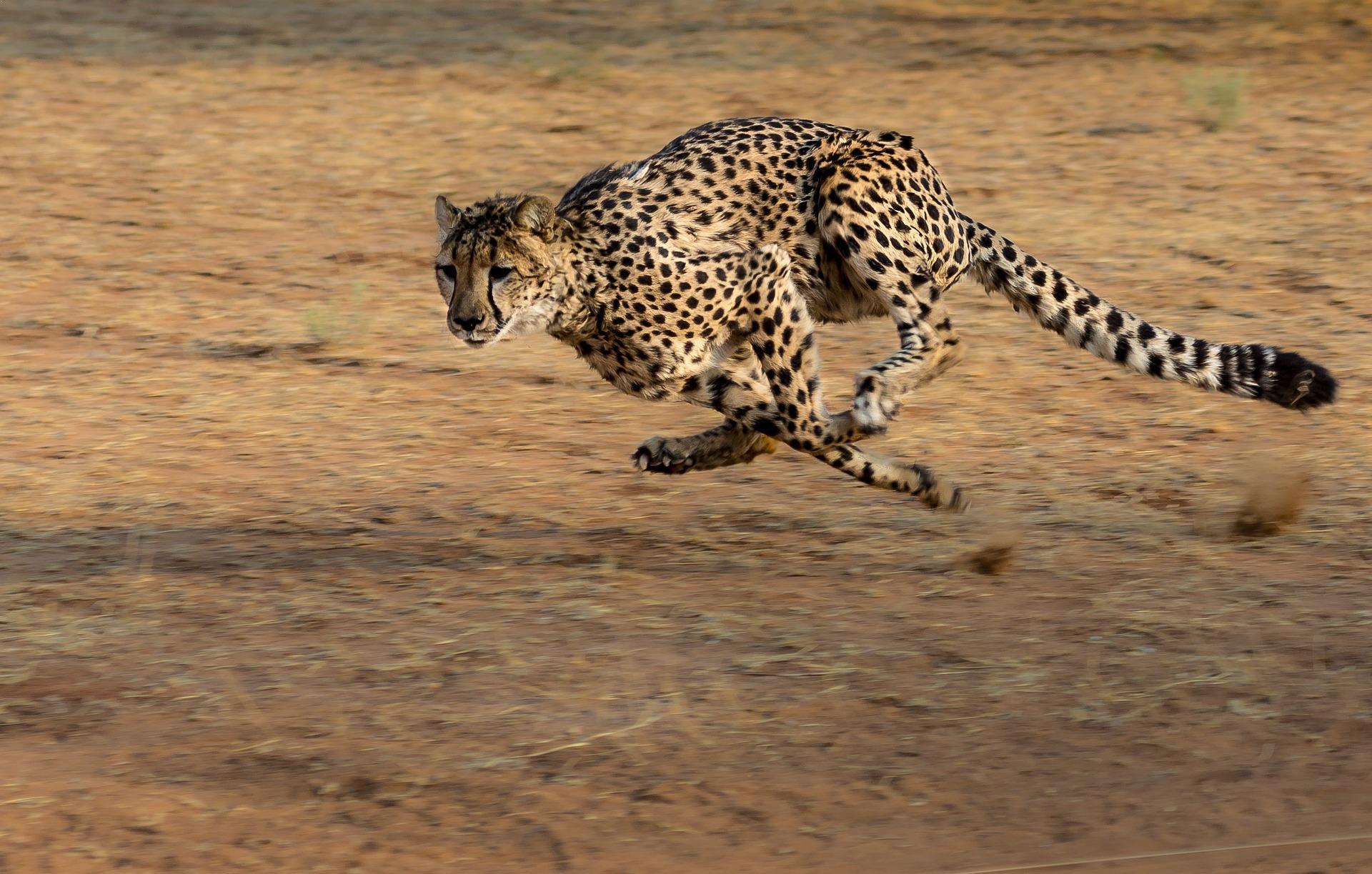 Fastest Land Animals In The World
