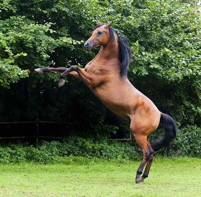 popular horse breeds