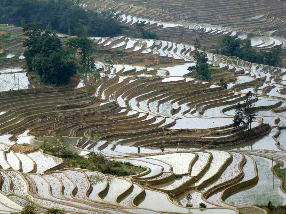 Hani rice terraces, China