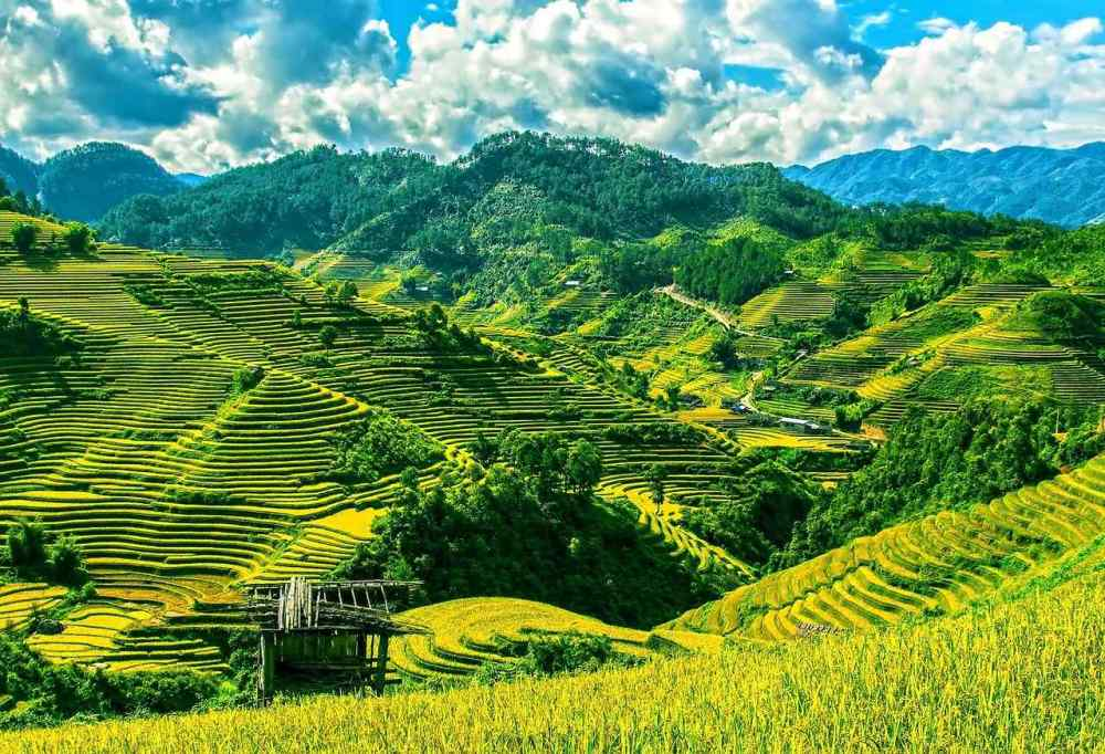Sa Pa Terrace fields, Vietnam
