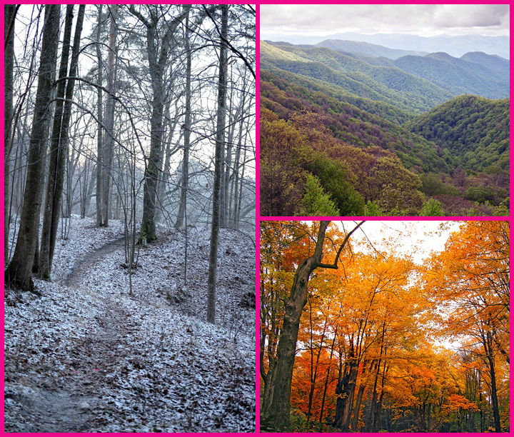 evergreens also provide a number of decorative and practical uses for people. Temperate Deciduous Forest Mission Biomes