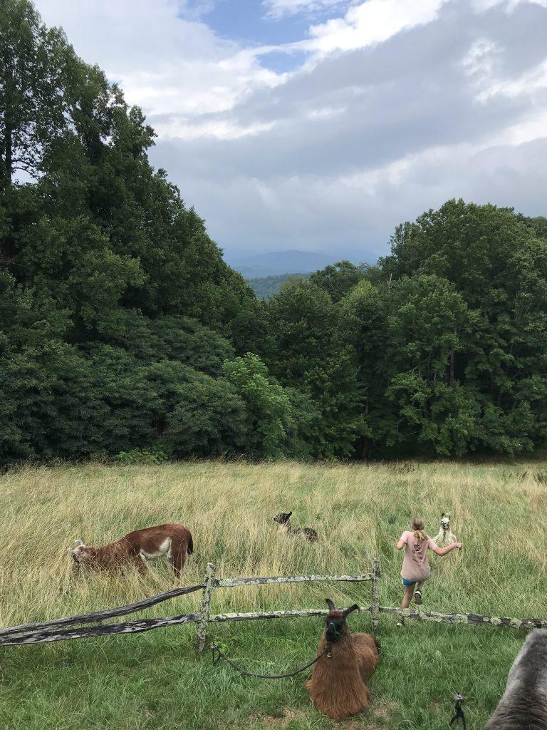 Llama hikes