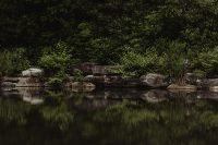 Pond (photo credit: http://jennichandler.com)
