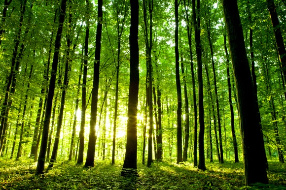 The first state of the carbon cycle report (soccr): An Earlier Spring For North American Forests Science Wire Earthsky