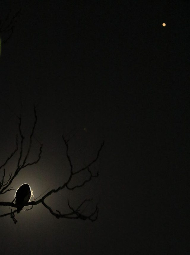 An owl in a tree, with moonlight behind it, and Mars in the upper right of the frame.