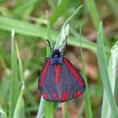 160607 CathaysCem biodiversity (8)