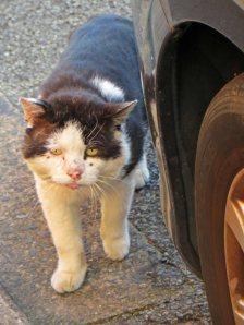 160619 welsh cats (3)