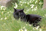 160619 welsh cats (8)