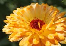 160722 flowers (6)