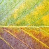 160912-autumn-leaves-5