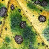 160912-autumn-leaves-9