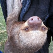 161020-international-sloth-day-3