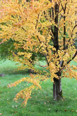 161101-golden-autumn-14
