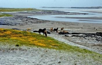 Great sandy inlet being cut off from sea. Kilronan